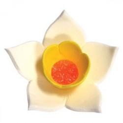 Нарцисс белый, 9шт